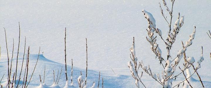 Nieve Manzaneda - Caldaria