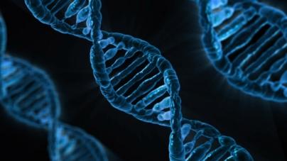 ADN - Caldaria