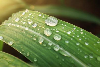 Día del Agua - Caldaria