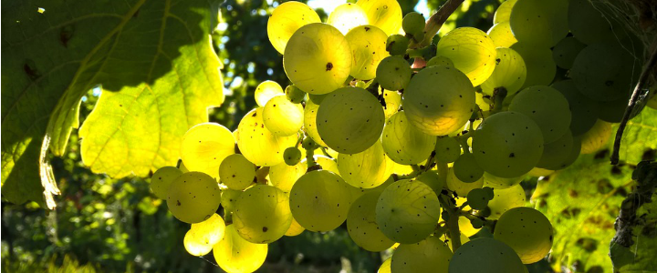 Paraísos del vino