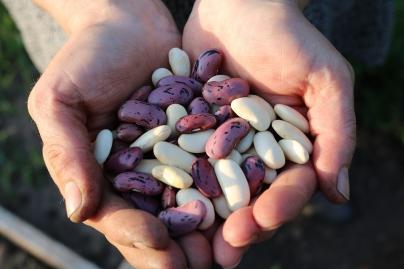 Legumbres - Caldaria