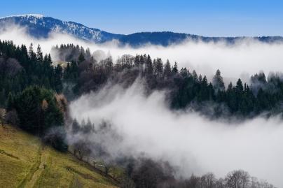 Bosques - Caldaria